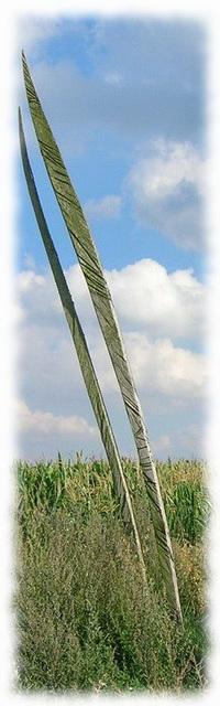 ventdesforets m1 (légèrement modifiée)