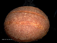 Sesame Whole-Wheat Bread