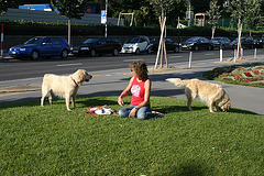 Girl with two golden retriever pups