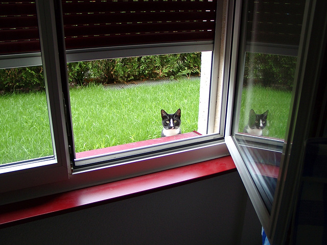 Feline spy