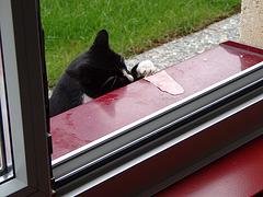 Cat stealing some ham