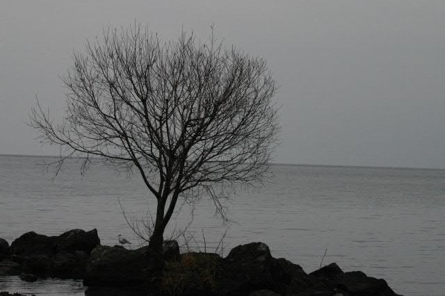 Gloomy Winter