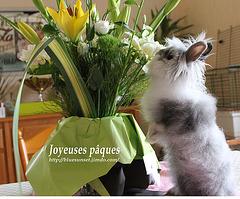 Boubouille et les fleurs ! Joyeuses Pâques à tous mes amis d'iper !!!!