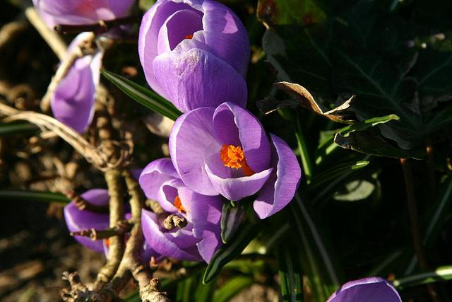 Spring in Esbjerg