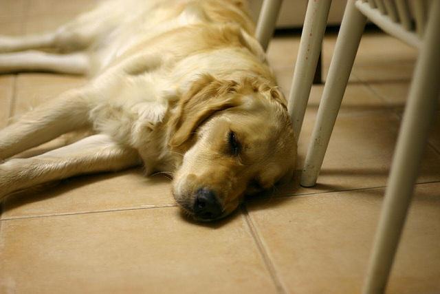Dog tired ...