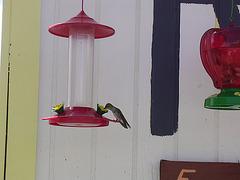 Escalante Staircase - Kolibri