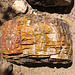 Escalante Staircase - Petrified Wood