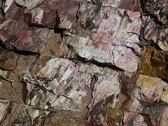 Escalante Staircase - Petrified Wood