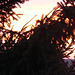 Abendrot - sunset - couchant 2009-02-02 - (2)
