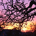 Abendrot - afterglow - couchant 2009-02-02 (6)