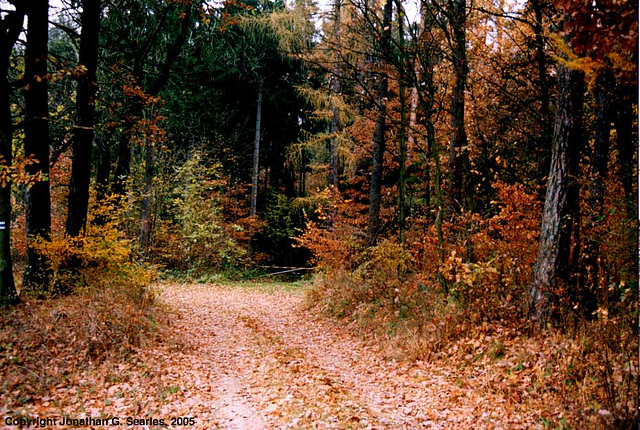 Path Near Cercany, Bohemia(CZ), 2005
