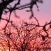 Abendrot - afterglow - couchant  2009-02-02 (13)