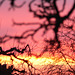 Abendrot - afterglow - couchant 2009-02-02 (14)