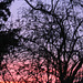 Abendrot - afterglow - couchant 2009-02-02 (16)