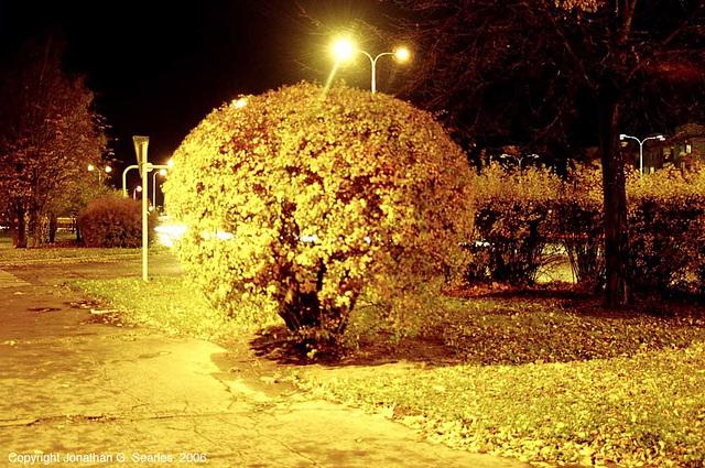 Yellow Bush, Sidliste Haje, Prague, CZ, 2006
