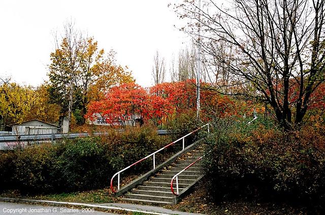 Fall Colors, Kacerov, Prague, CZ, 2006