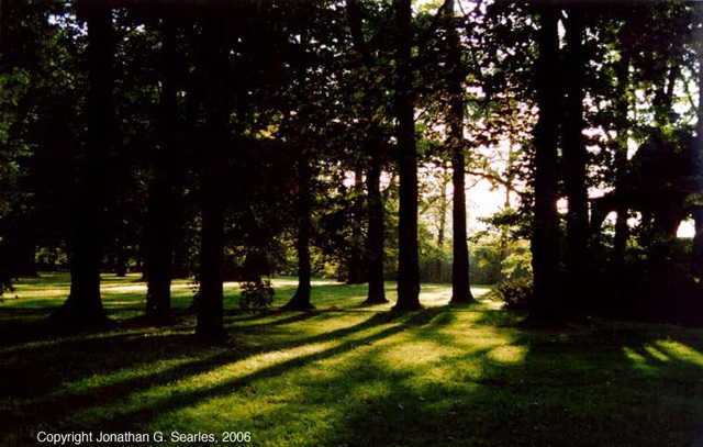 Sunset Through Trees, Cesky Krumlov, South Bohemia(CZ), 2006