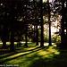Sunset Through Trees, Cesky Krumlov, South Bohemia(CZ), 2006