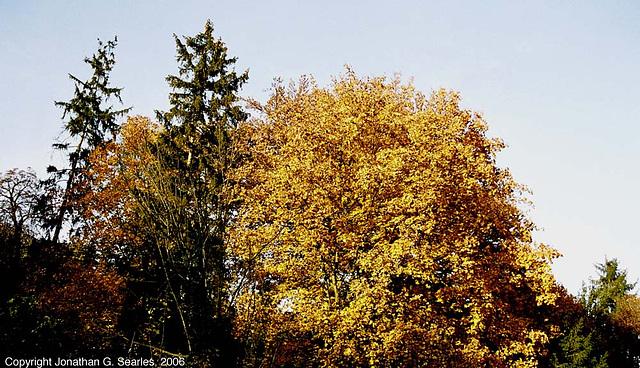 Maple And Others, Tiche Udoli Ulice, Roztoky U Prahy, Bohemia(CZ), 2006