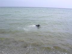 gute Schwimmerin