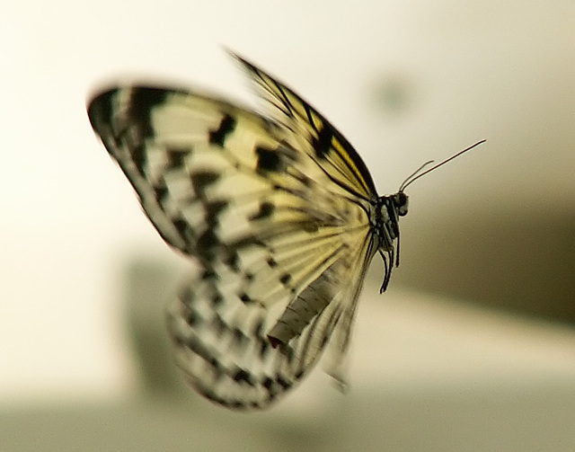 Schmetterling Detail 2