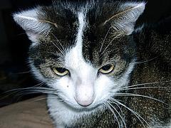 Portrait of Rocky