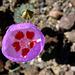 Flower (2406)