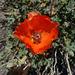 Flower (3935)
