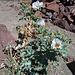 Flowers (3938)