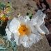 Flowers (3939)
