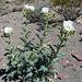 Flowers (3940)