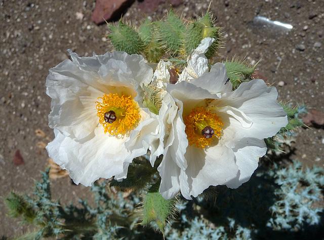Flowers (3941)