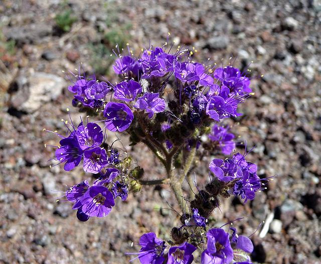 Flowers (3951)