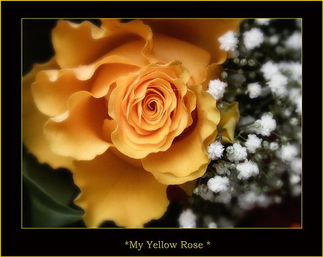*Gelbe Rose*