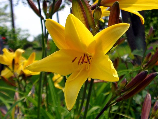 Gelbe Blüte