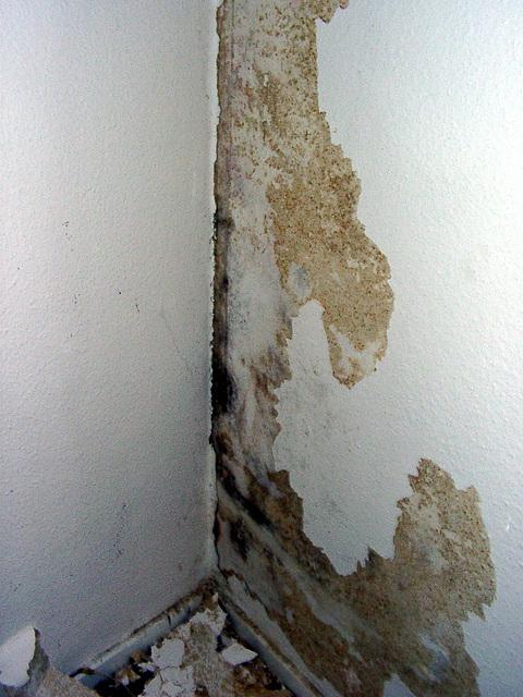 Schimmelige Wand