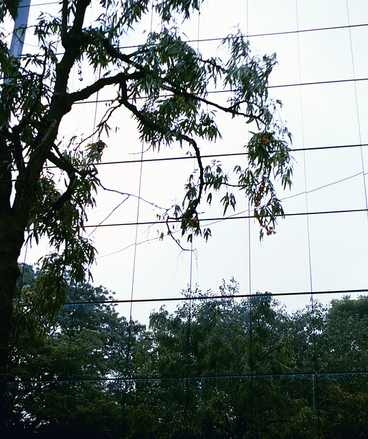 Tree-flection
