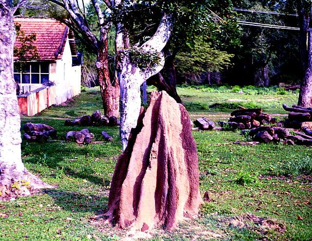 Termitopolis