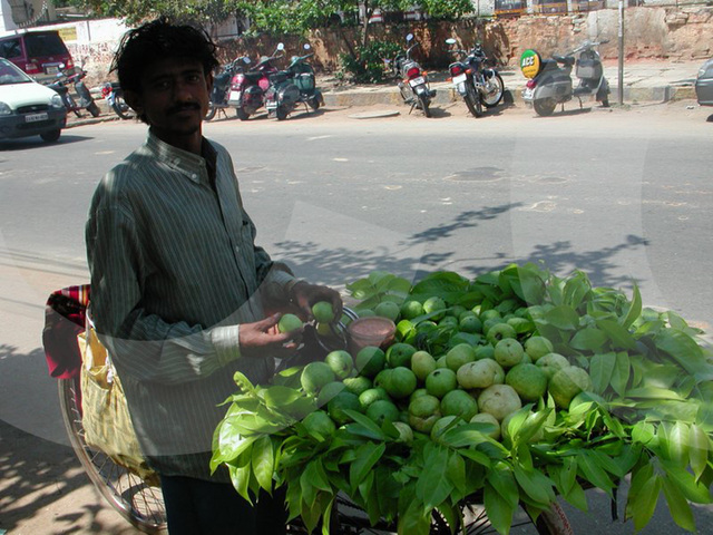 selling guavas