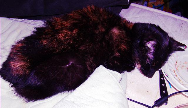 """The definitely last photo of my cat """"Noisy"""""""