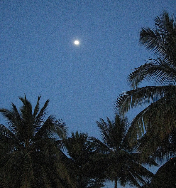 Moon and palms