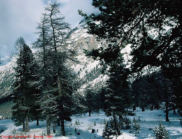 Swiss Landscape, Picture 2, near Pontresina, Switzerland, 1998