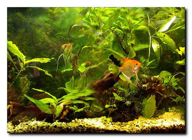 Mein Aquarium (für Rosi)