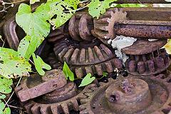 Nature survives technical progress