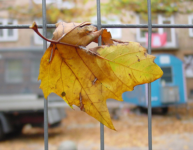 autumn leaf [reloaded]