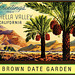 Brown Date Garden postcard
