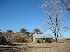 Brown Date Garden (8808)