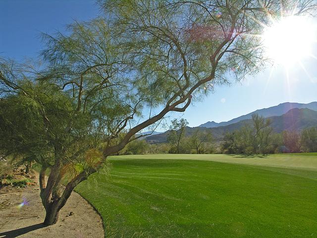 La Quinta golf course (6807)