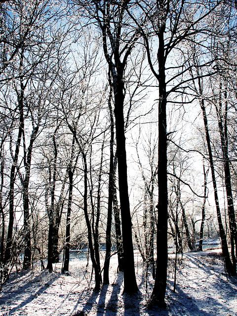 kein Wald