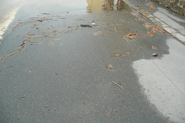 Frühjahrshochwasser bei Wehlen März 2009